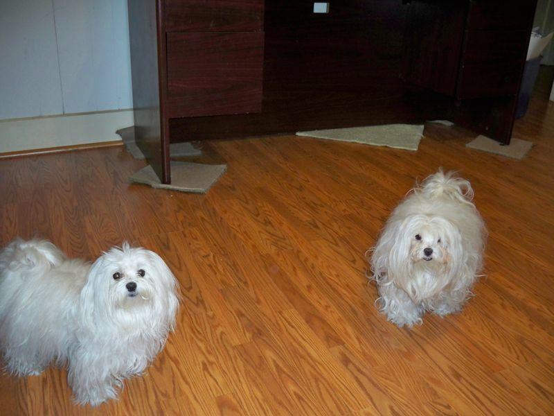 Dogs floor