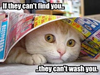 If-they-cant-find-you-they-cant-wash-you