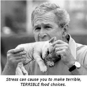 Bush_eating_kitten-cap
