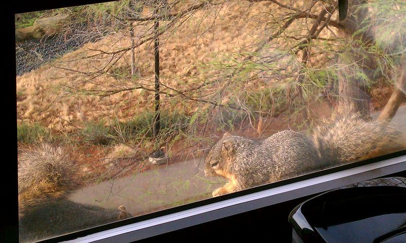 2squirrels