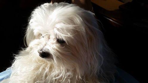 Josie sundog