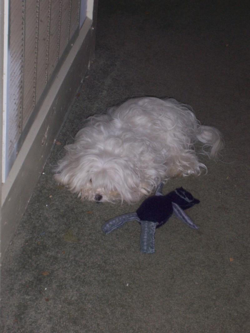 Stuffie1