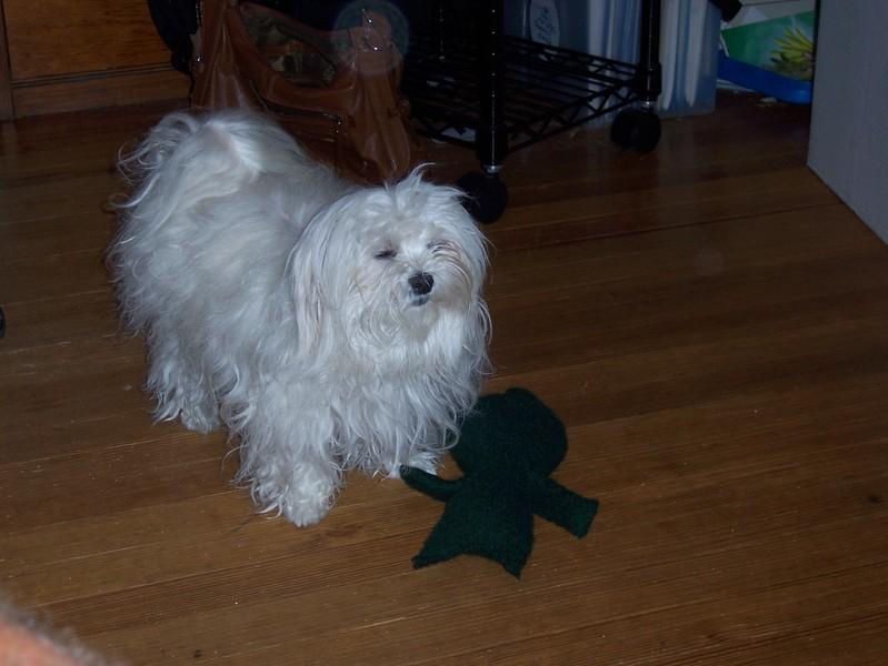 Stuffie2