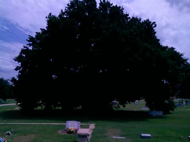 Cemetery_tree