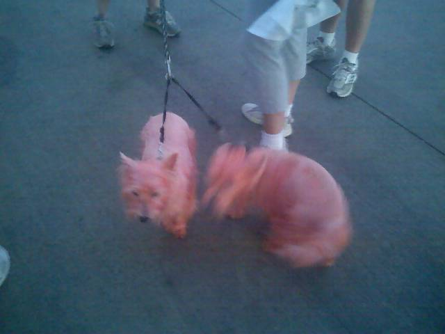 Pink_dogs