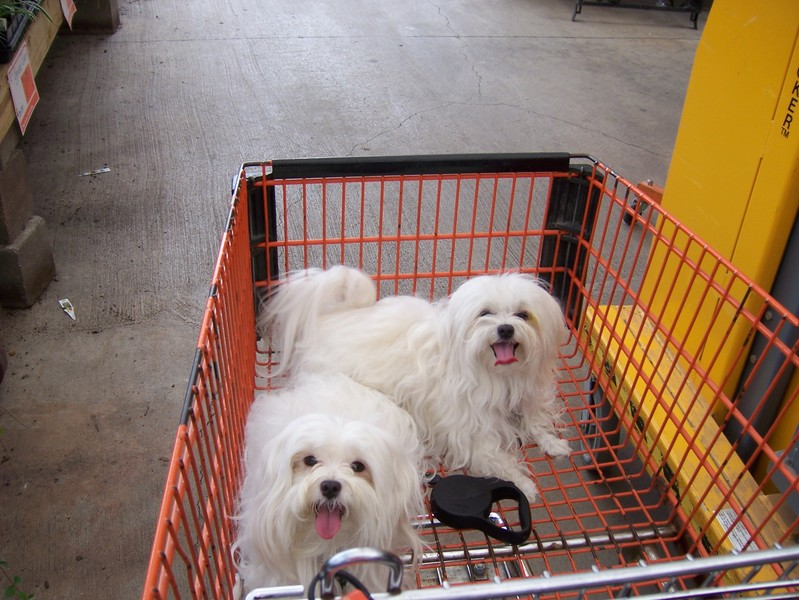 Dogs_in_basket