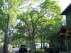 Bowdark_tree