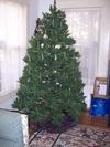 Christmas_trees_001