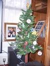 Christmas_trees_003