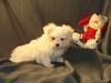 New_puppy